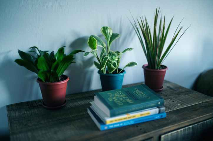 photo of houseplants near books