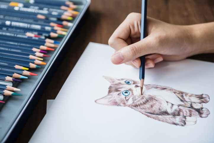 person sketching a kitten